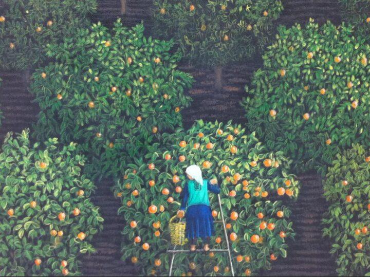 Orange pickers in Turkey