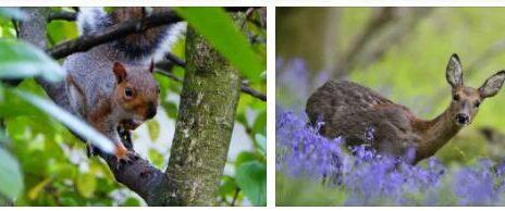 United Kingdom Wildlife